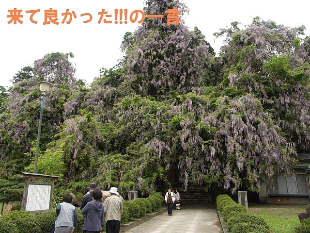礒部神社 (4)