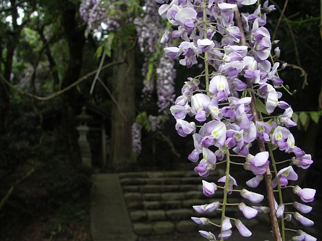 礒部神社 (8)