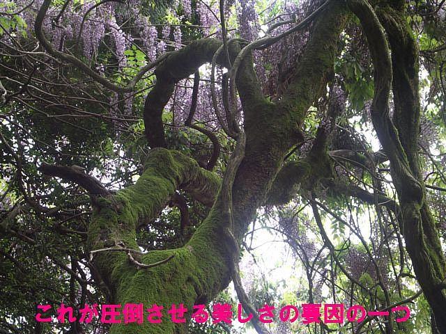 礒部神社 (10)