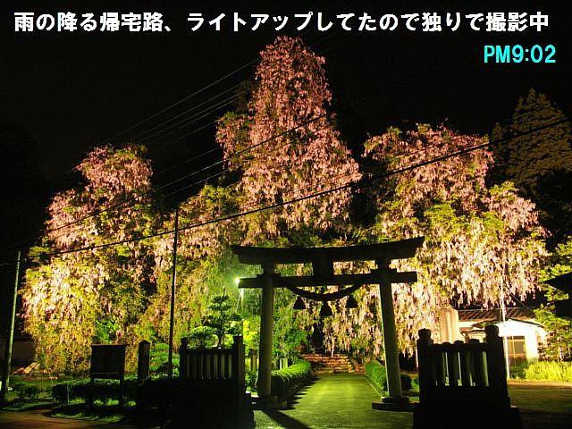 礒部神社 (13)