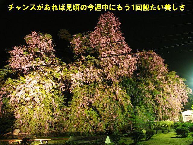 礒部神社 (14)