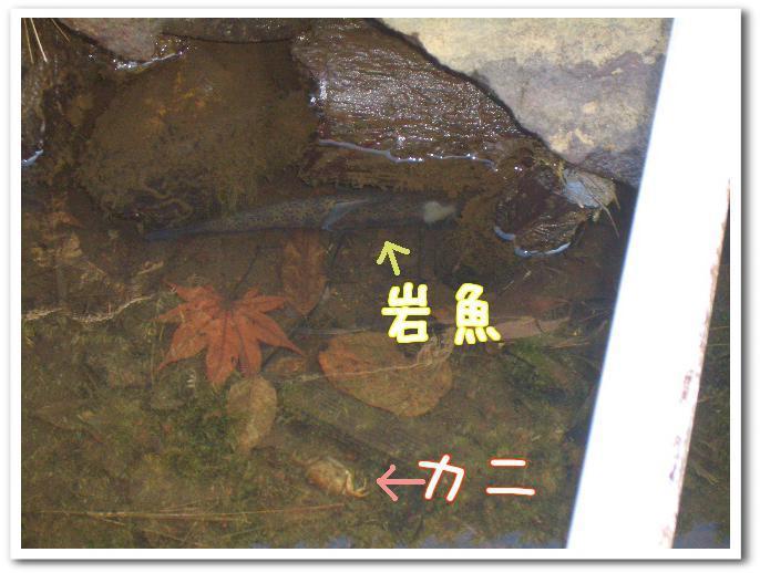 岩魚とカニ