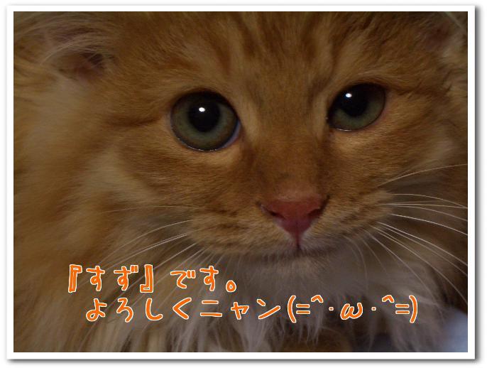 CIMG3384.jpg