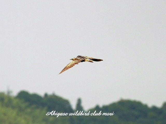 IMG_5459 sankano-1