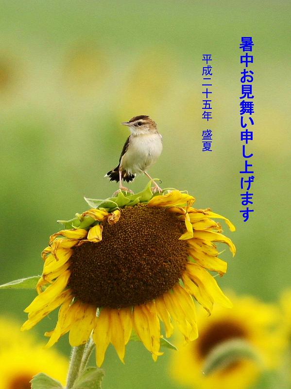 conv0001_20130802093329116.jpg
