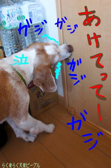 Bガジガジ開けて〜泣DSC02735