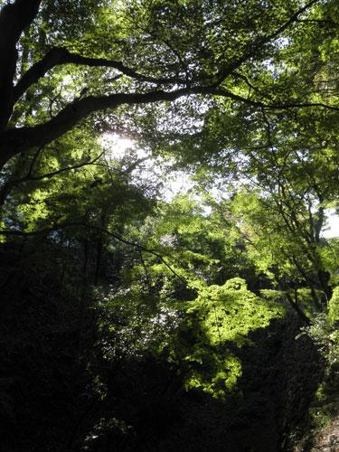 岡崎城の緑