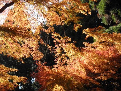 稲荷山紅葉