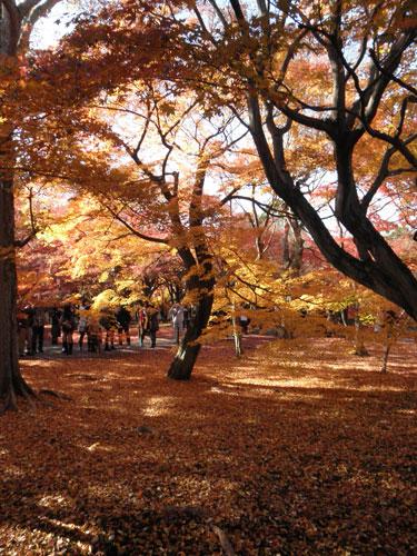 東福寺紅葉1