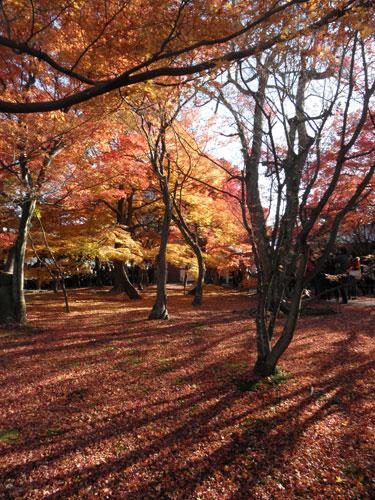 東福寺紅葉3