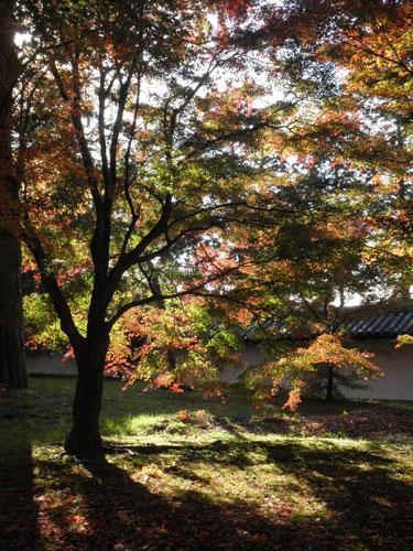 東福寺紅葉4