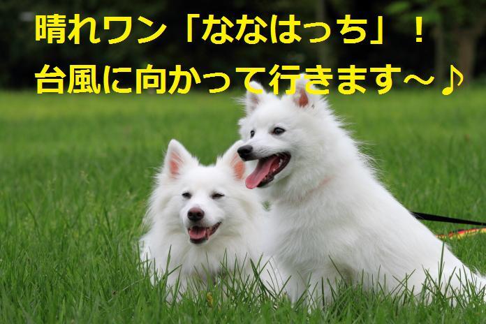 IMG_89142010.jpg