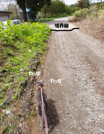 2011053107.jpg
