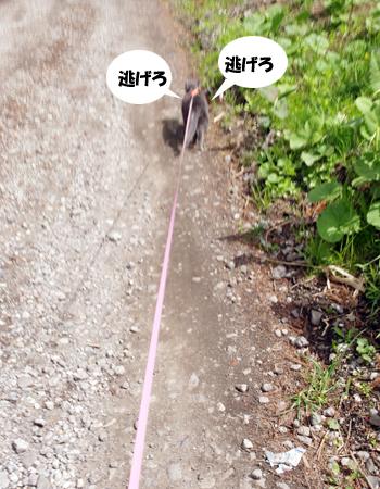 2011053109.jpg