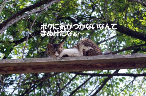 2011060206.jpg