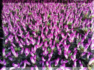 銀座のお花