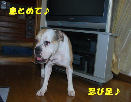 DSC_0005_20130929200519821.jpg