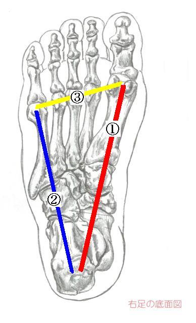 右足の底面図