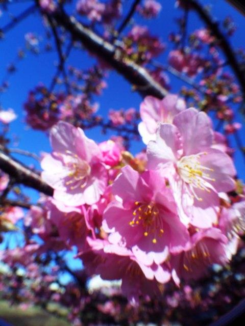 2012.3.13 桜2