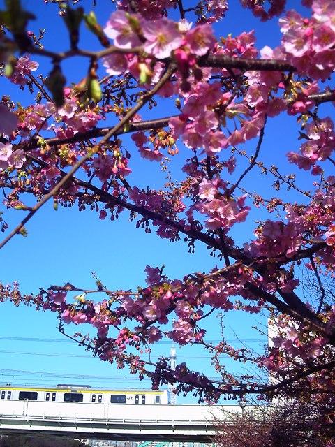 2012.3.13 桜1