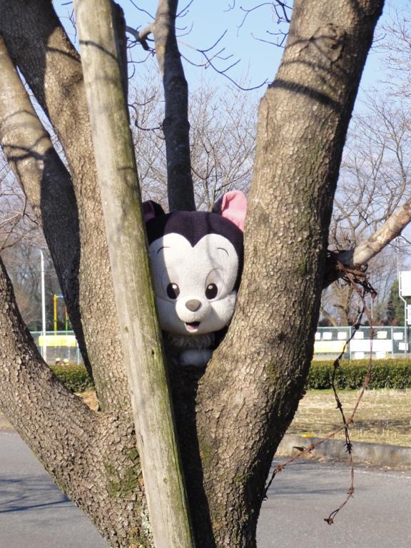 木に挟まれミニーちゃん