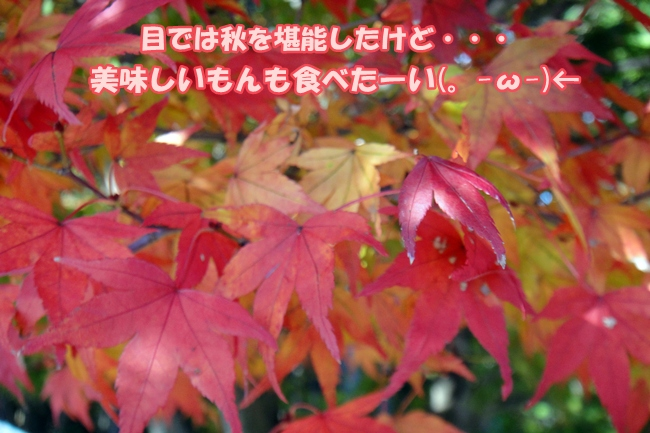 DSC02799.jpg