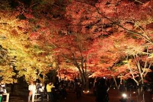 1114nagatorokankokyoukai_lightup-2.jpg