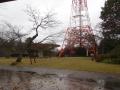 雨のさんぽ 032