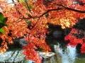 西山公園紅葉1 054