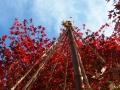 西山公園紅葉1 051