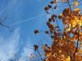 西山公園紅葉1 065