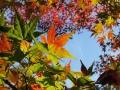 西山公園紅葉1 070