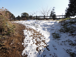 2011-0116-2.jpg