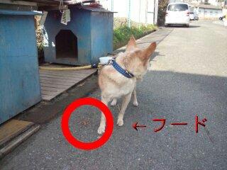 Dec_11_2011_931.jpg