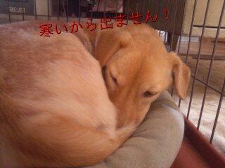 Nov_16_2011_812.jpg