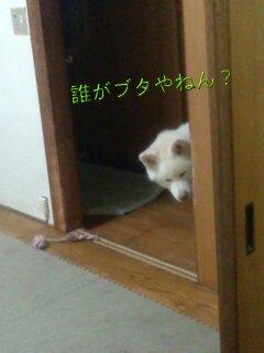 Nov_23_2011_648.jpg
