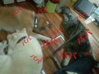 Nov_5_2011_527.jpg