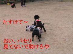 IMG_0058-1.jpg