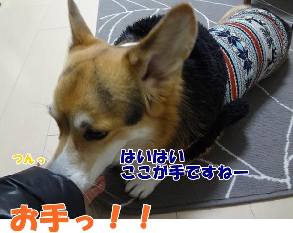 3_20130131173628.jpg