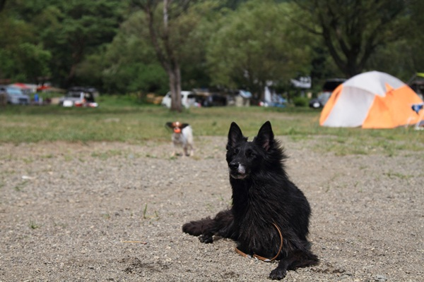 2011_08_18 西湖 ブログ用DPP_0168