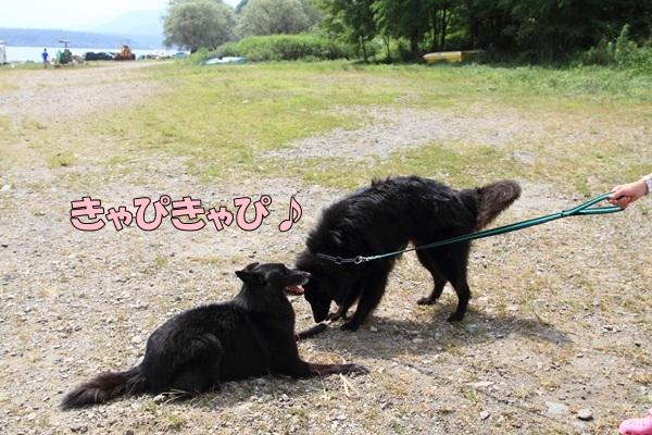 2011_08_18 西湖 ブログ用DPP_0118