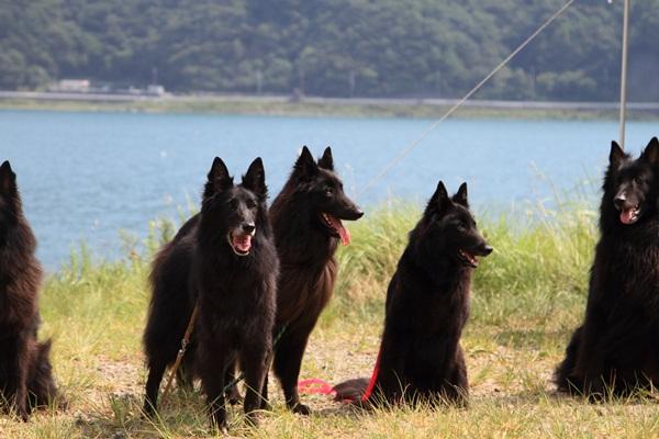 2011_08_18 西湖 ブログ用DPP_0114