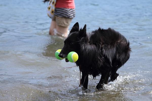2011_08_18 西湖 ブログ用DPP_0126