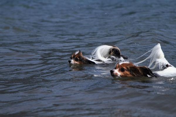 2011_08_18 西湖 ブログ用DPP_0187