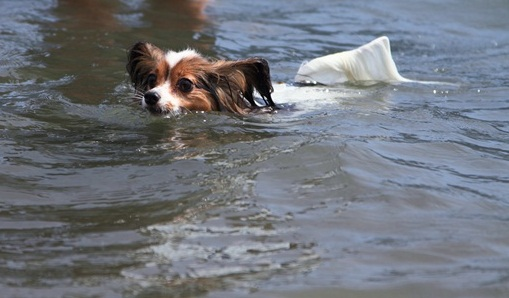 2011_08_18 西湖 ブログ用DPP_0175