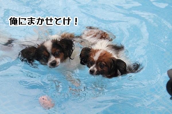 2011_08_24 ペットフォレストプール ブログ用2011_08_24 ペットフォレストプールDPP_0051