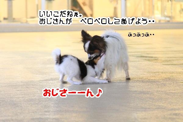2011_08_24 ペットフォレストプール ブログ用2011_08_24 ペットフォレストプールDPP_0113