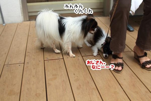2011_08_24 ペットフォレストプール ブログ用2011_08_24 ペットフォレストプールDPP_0096