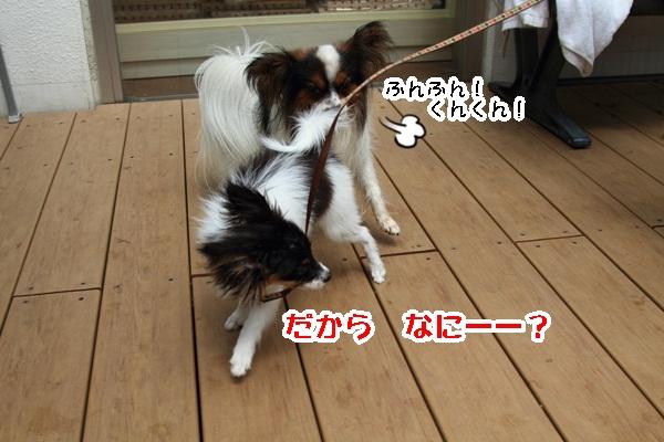 2011_08_24 ペットフォレストプール ブログ用2011_08_24 ペットフォレストプールDPP_0097