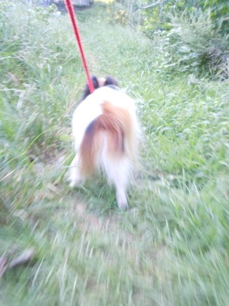 2011_09_07 お散歩DSCN1138